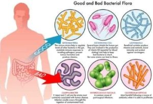 good&bad gut flora