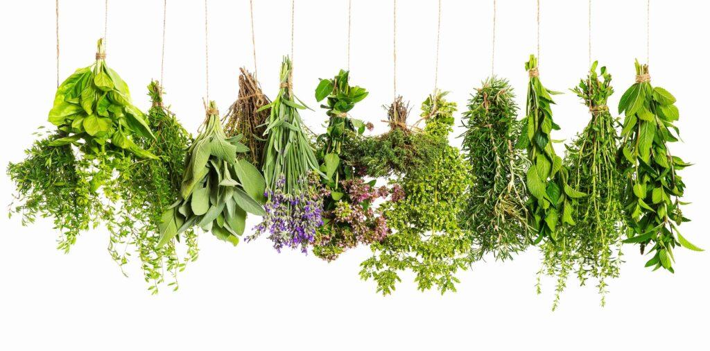 herbs for gut health