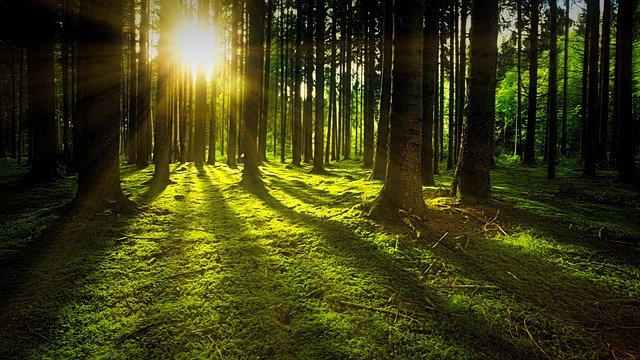 light in woods hope